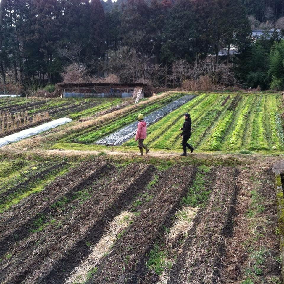 Farm in Japan
