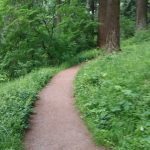 Forest bathing in Mt. Tabor Park